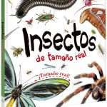 IGMLI1 insectos tamaño real